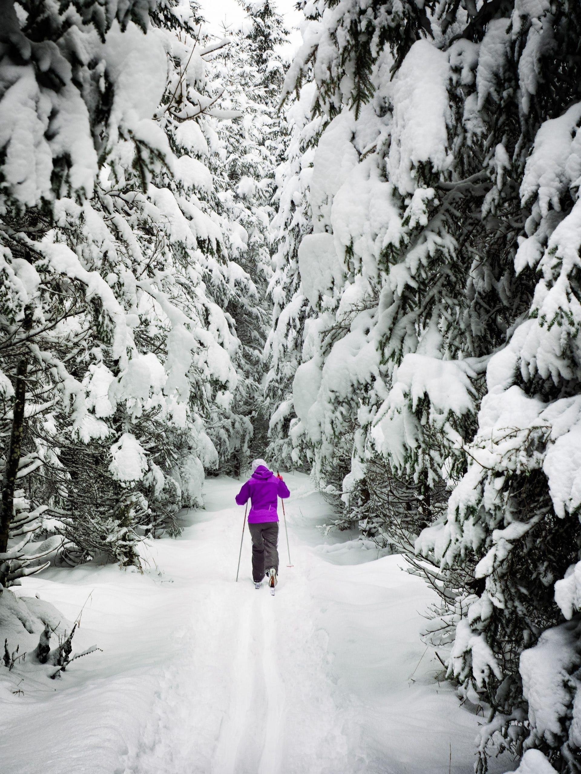 Bouger l'hiver   le ski de fond